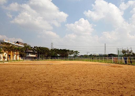 lapangan berkuda pandesa riding school
